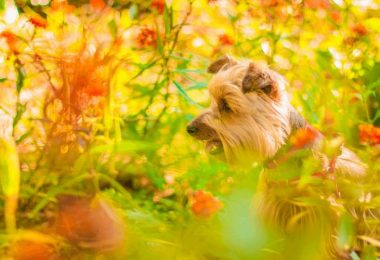 Top 15 Poisonous Plants For Dogs