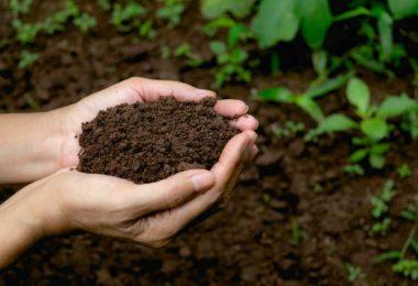 Vermicompost Vs Compost | Major Differences