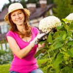 When to Prune Hydrangeas plant