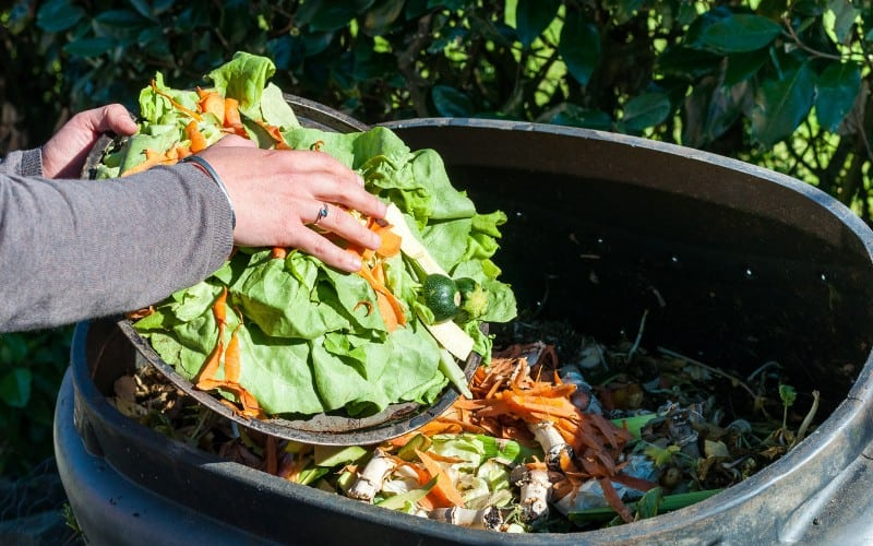 difference between vermicompost and compost