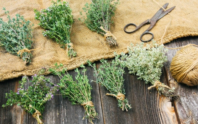 how to store thyme after harvesting
