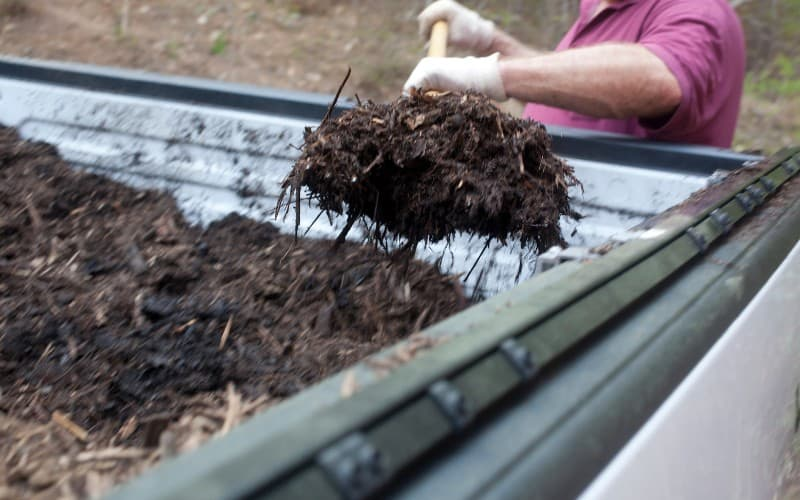 Does Mulch Attract Mosquitoes