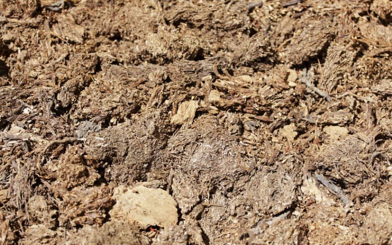 What Attracts Roaches in Mulch