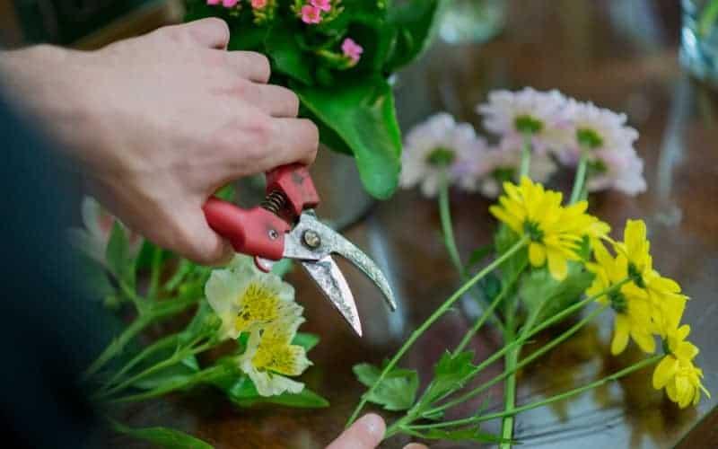 When to Trim Flowering Shrubs