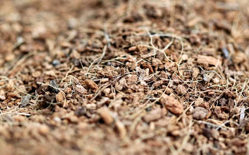 how to kill cockroaches in a mulch