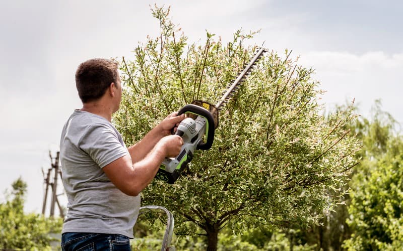 Best Hedge Trimmers For Thick Branches