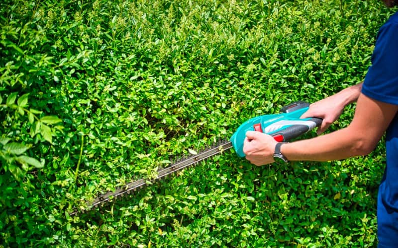 Difference Between Pole Saw and Hedge Trimmer