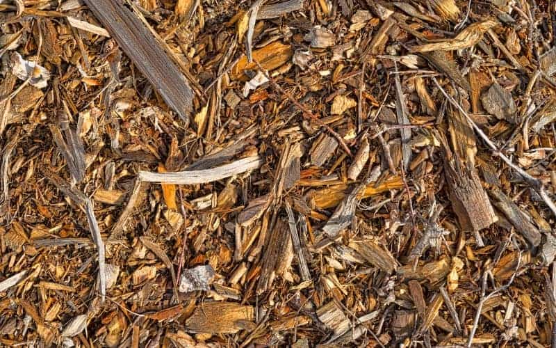 Does Cedar Mulch Repel Mosquitoes