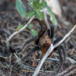 Does Mulch Attract Spider