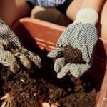 Geraniums Fertilization Problems
