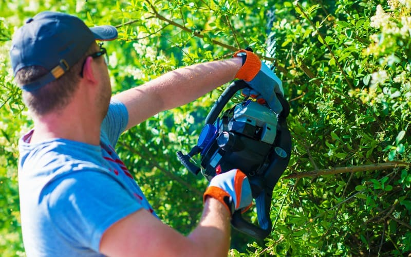 Hedge Trimmers For Thick Branches Reviews