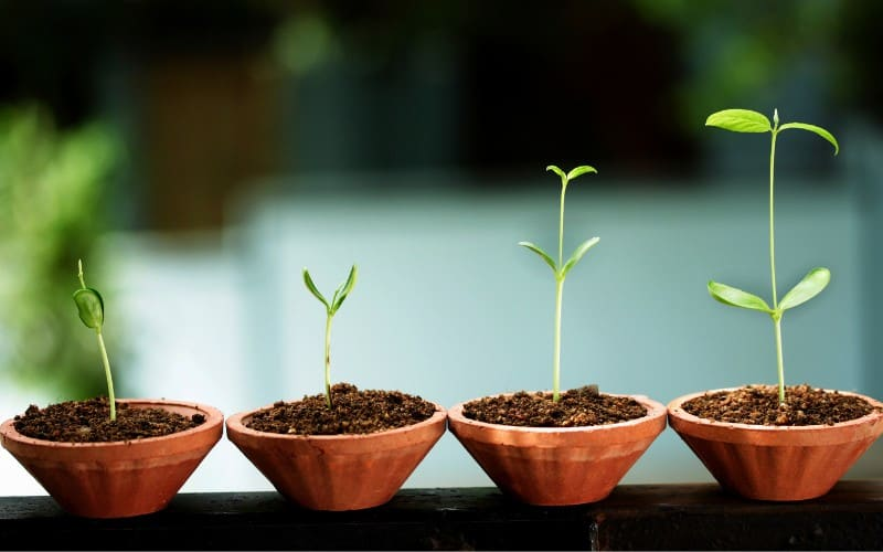 Types Of Growth In Plants