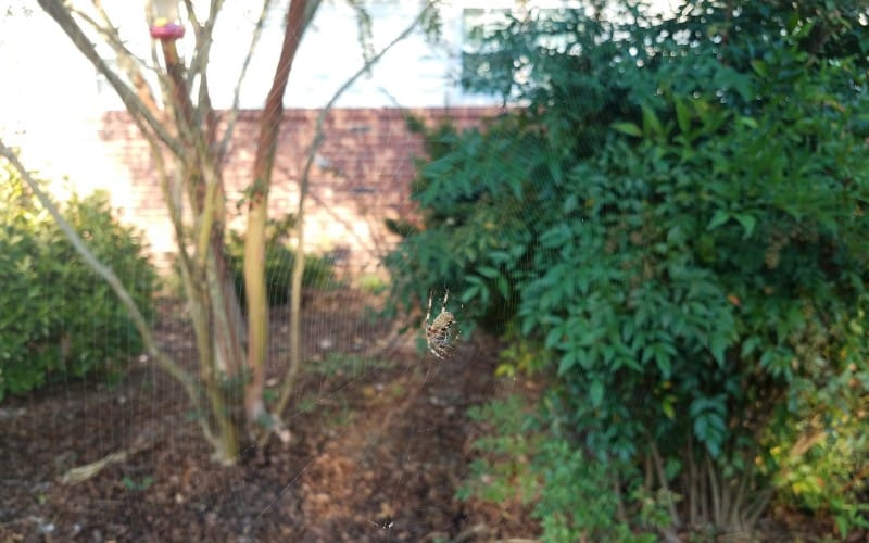 Types of Mulches That Attract Spiders