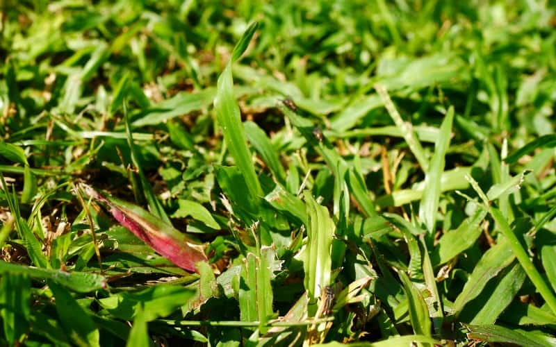 Weed Killers For Bermuda Grass Reviews