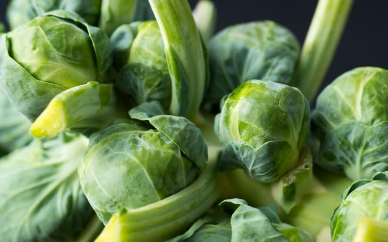 common problems of brussels sprouts