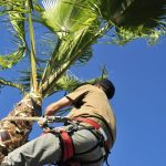 How to Trim Palm Tree Trunk