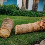If You Cut A Palm Tree in Half Will It Grow Back