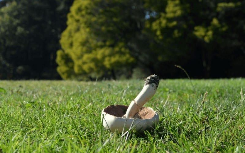 How To Grow Gourmet Mushrooms