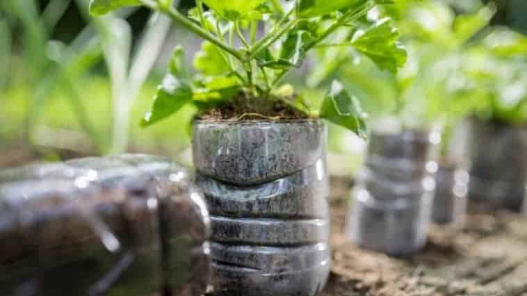 How To Grow Plants In Plastic Bottles