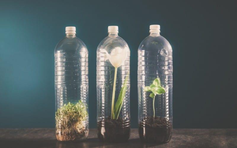 Is Growing Plants in Plastic Bottles Harmful