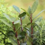 Medicinal Plants And Their Benefits