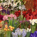 Names of Flowers in Alphabetical Order