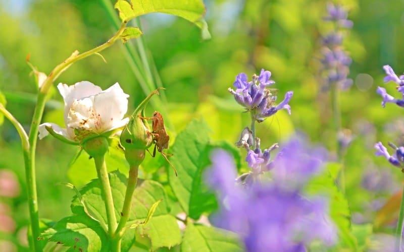 Plants That Keeps Bugs Away