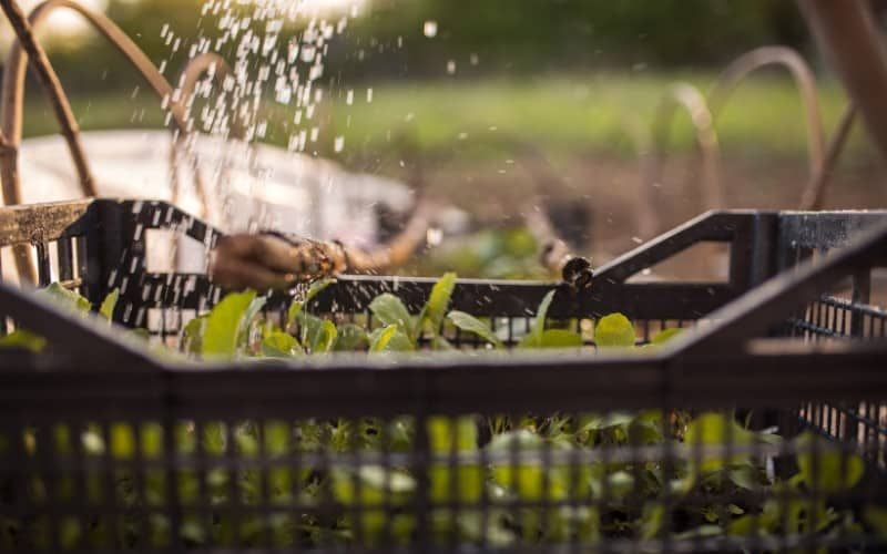 What Plants Can You Grow From Cuttings In Water