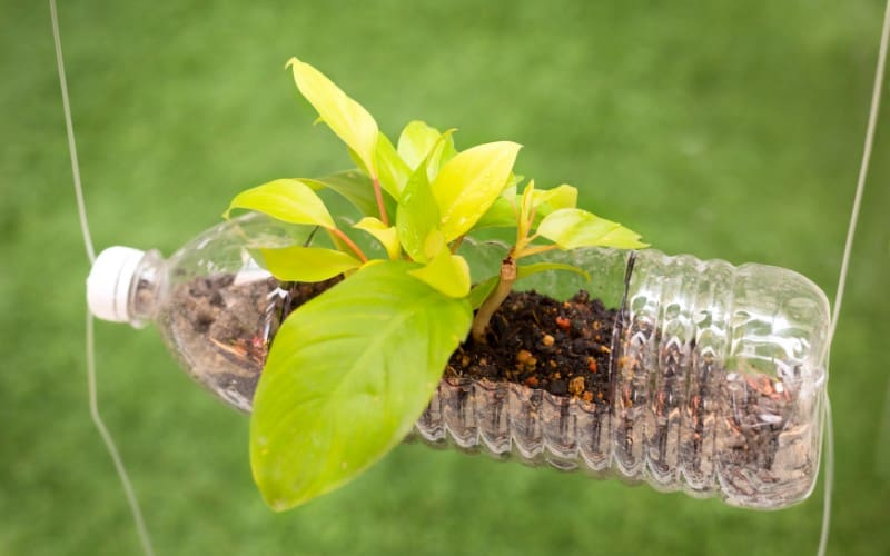 Which Plants Can Be Grown in Bottles