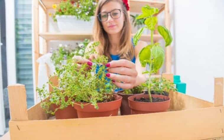 Why You Should Grow Your Plants from Cuttings in Water