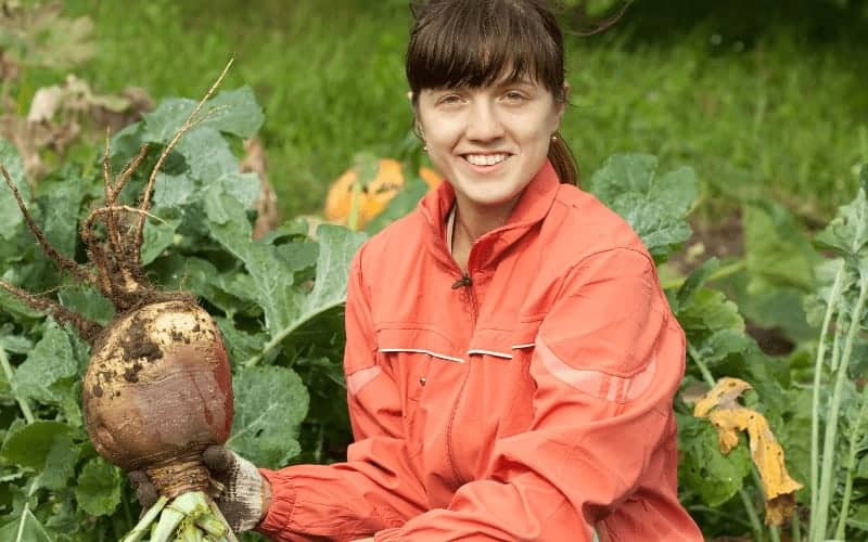 Best Variety Of Rutabaga Plants To Grow From Scraps