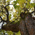 Deciduous Trees Vs Coniferous Trees