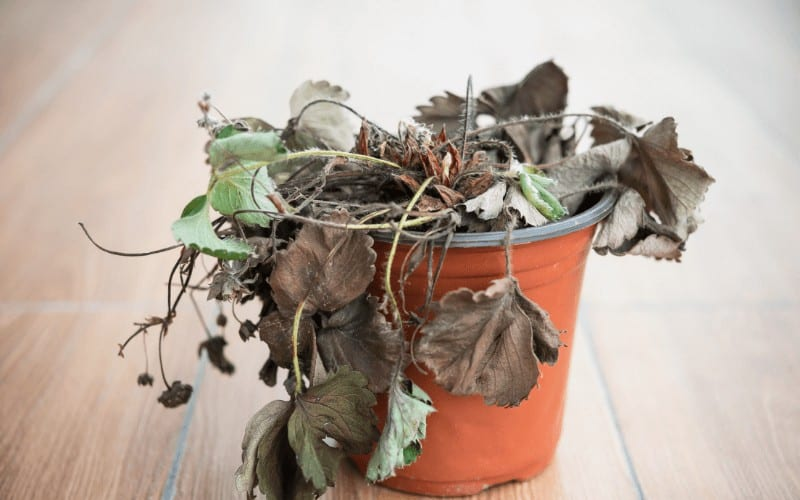 How Long Does It Take to Revive A Dead Plant
