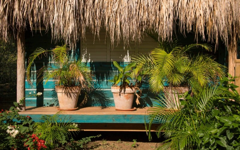 How To Revive a Dying Potted Palm Tree