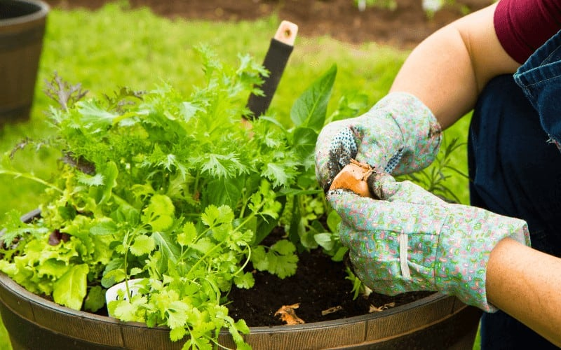 Is It Safe to Grow Vegetables In 5 Gallon Buckets