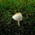Is Mushroom A Vegetable