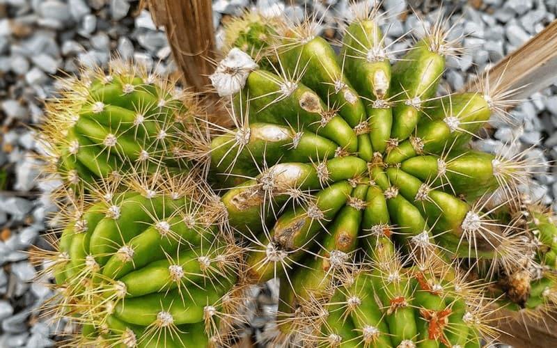 Uinta-Cactus