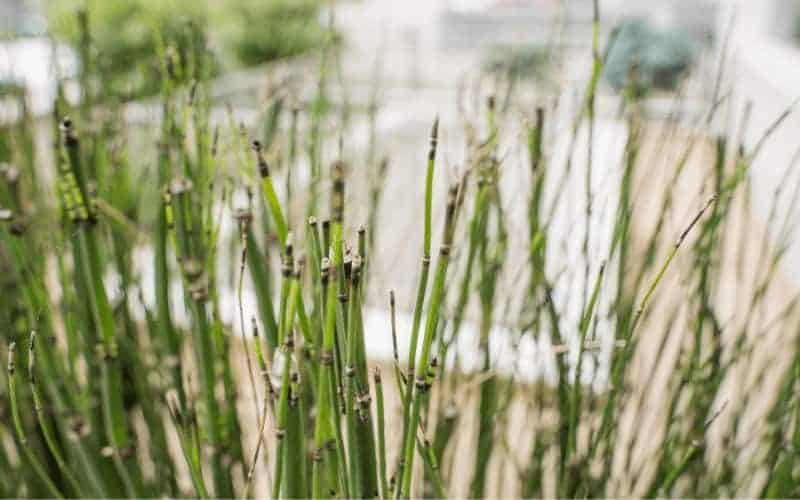 Why Your Bamboo Plant is Dying
