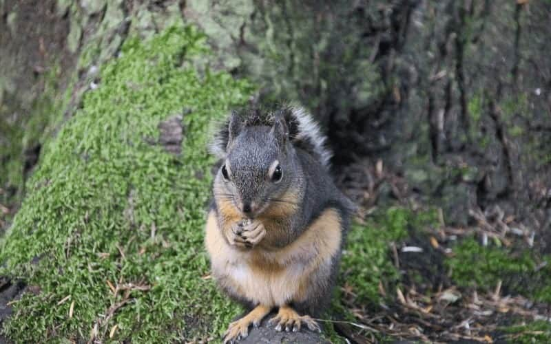 Protecting Fruit Trees from Rats
