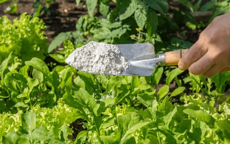 How to Use Diatomaceous Earth in Potted Plants