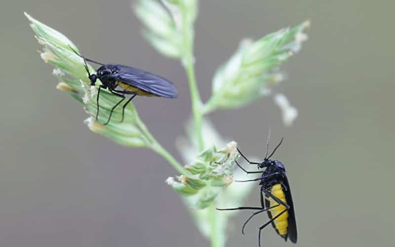 What Attracts Gnats To Houseplants