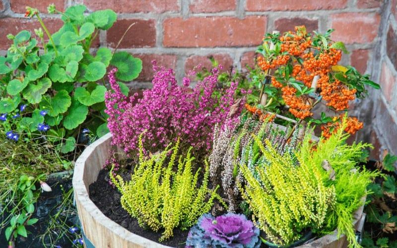 best plants to grow in pots