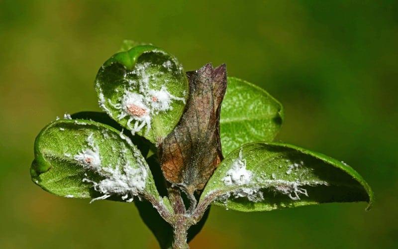 Types of Leaf Diseases