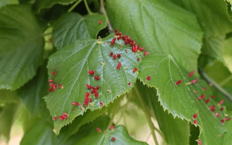 What Is Leaf Disease In Plant