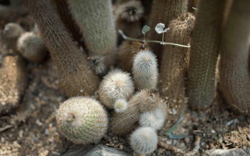 Do Cactus Like Humidity