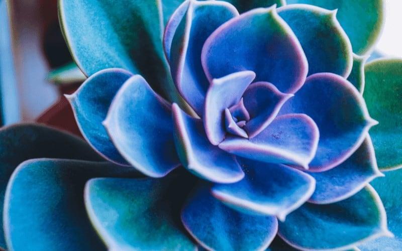 Do Succulents Like Humidity
