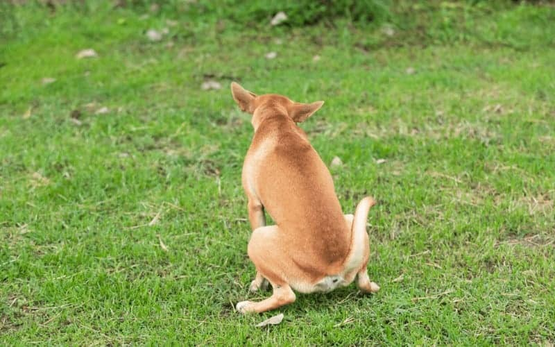 How To Identify Dog Urine Spot on your Lawn