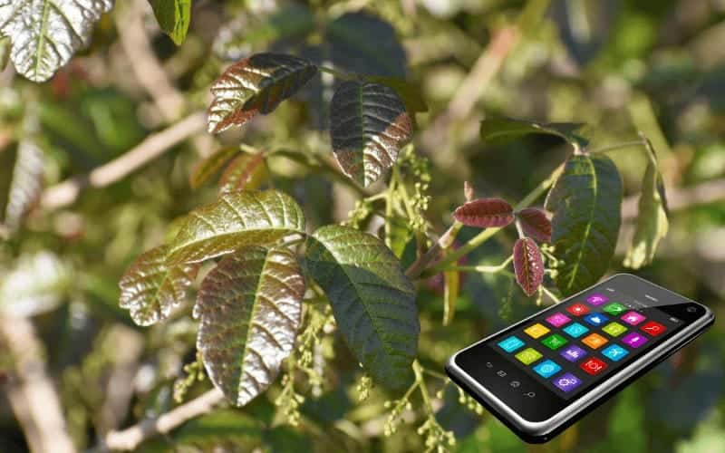 Plant Identification Apps