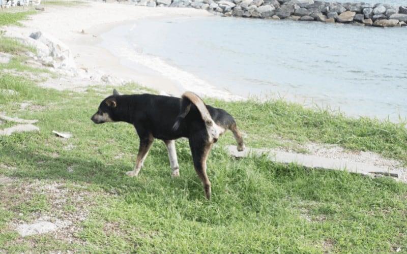 Will Grass Grow Back After Dog Urine