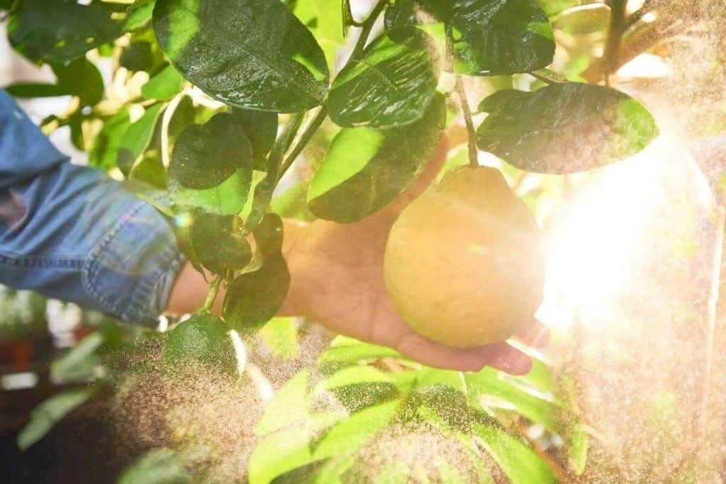 Does Spraying Water on Fruit Prevent Frost Damage